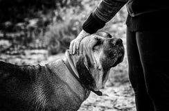 Jeune femme avec le chien de chien en nature Images stock