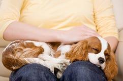 Jeune femme avec le chiot dormant sur les genoux Image libre de droits