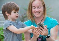 Jeune femme avec le fils jouant avec le bébé de hérisson Image libre de droits