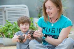 Jeune femme avec le fils jouant avec le bébé de hérisson Photos libres de droits