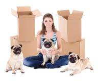 Jeune femme avec les boîtes en carton brunes et l'isolat mignon de chiens de roquet photographie stock