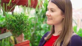 Jeune femme dans la boutique du ` s de fleuriste tenant l'arbre vert dans le pot Plantes et fleurs femelles de cueillette de clie banque de vidéos
