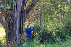Jeune femme dans la forêt australienne Image libre de droits