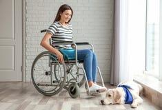 Jeune femme dans le fauteuil roulant avec le chien Image stock
