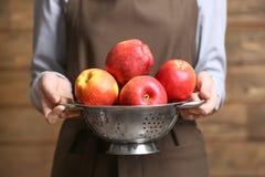 Jeune femme dans le tablier tenant la passoire avec les pommes juteuses Image libre de droits