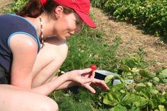 Jeune femme dans une fraise field3 Image stock