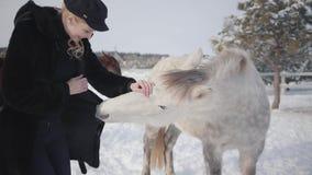 Jeune femme de sourire choyant le museau du cheval blanc adorable de pur sang dans le ranch d'hiver animal urious essayant de mâc banque de vidéos
