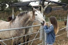 Jeune femme donnant l'affection à quelques chevaux photos stock