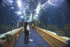 Jeune femme et aquarium photo libre de droits