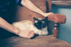 Jeune femme et chat sur le sofa Photo libre de droits