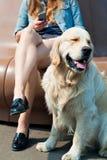 Jeune femme et son golden retriever de chien en parc Photographie stock libre de droits