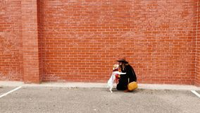Jeune femme et son petit chien mignon ayant dehors l'amusement Beau chien embrassant son propriétaire De jour, urbain et ville clips vidéos