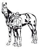 Jeune femme fière retenant son cheval Image stock