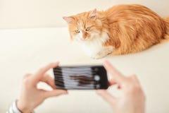 Jeune femme gaie prenant la photo de l'animal familier Image stock