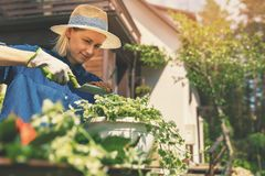 Jeune femme heureuse plantant des fleurs d'été dans le pot photo stock