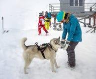 Jeune femme jouant avec le chien de traîneau sibérien de chien Photographie stock