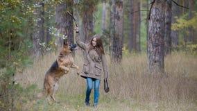 Jeune femme jouant avec un chien de berger dans la forêt d'automne - courses pour le bâton jeté image stock
