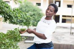 Jeune femme jouant les feuilles de l'arbre Image stock