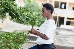 Jeune femme jouant les feuilles de l'arbre Photographie stock libre de droits