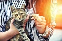 Jeune femme jugeant le chat mignon extérieur Amitié Amour Soin d'animaux familiers Photos stock