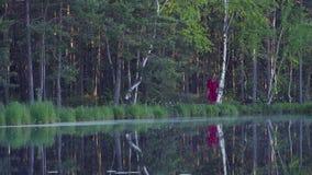 Jeune femme marchant dans la forêt près du lac banque de vidéos