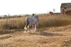 Jeune femme marchant une route avec le cheval Photographie stock libre de droits