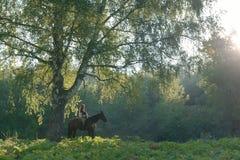 Jeune femme montant un cheval sur un beau paysage de forêt sunlight photographie stock