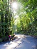 Jeune femme obèse avec le chien sur la route Photo stock