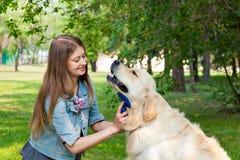 Jeune femme peignant le chien de golden retriever de fourrure sur une pelouse verte Photographie stock libre de droits