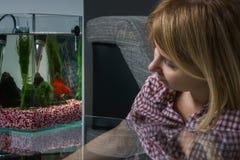 Jeune femme regardant de bêtas poissons dans l'aquarium à la maison image libre de droits