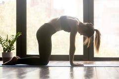 Jeune femme sportive faisant des pilates ou la pose de Marjaryasana de yoga photos stock