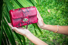 Jeune femme tenant un sac à main fait main de luxe de python de peau de serpent Jour ensoleillé Embrayage cher Fermez-vous des ma Photographie stock libre de droits