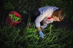 Jeune femme tirant des mauvaises herbes Images libres de droits