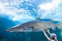 Jeune femme touchant un réservoir de requin photo libre de droits