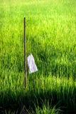 Jeune ferme de riz Images stock