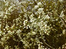 Jeune feuille de belle petite fleur et fond vert de nature Photos stock