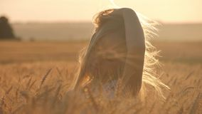 Jeune fille dans un domaine d'or pendant le coucher du soleil banque de vidéos