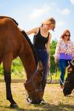 Jeune fille de jockey choyant le cheval brun Photos libres de droits