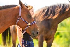 Jeune fille de jockey choyant le cheval brun Images libres de droits
