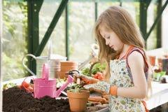 Jeune fille en serre chaude mettant la plante dans le bac image libre de droits
