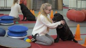 Jeune fille formant Labrador noir pour lui donner une patte banque de vidéos