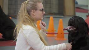 Jeune fille formant Labrador pour lui donner une patte banque de vidéos