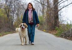 Jeune fille marchant avec son crabot de berger de Bucovina images libres de droits