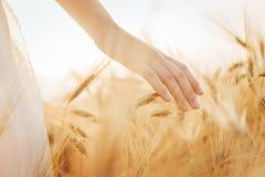 Jeune fille marchant par le champ et le blé de contacts image stock