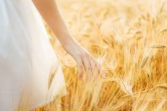 Jeune fille marchant par le champ et le blé de contacts photographie stock libre de droits