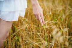 Jeune fille marchant par le champ et le blé de contacts photographie stock