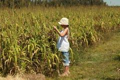 Jeune fille regardant une zone de maïs Image libre de droits