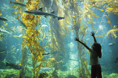 Jeune fille se levant contre le grand verre d'observation d'aquarium image stock