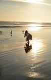 Jeune fille sur la belle plage d'or Images stock
