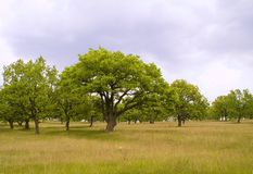 Jeune forêt Photo stock